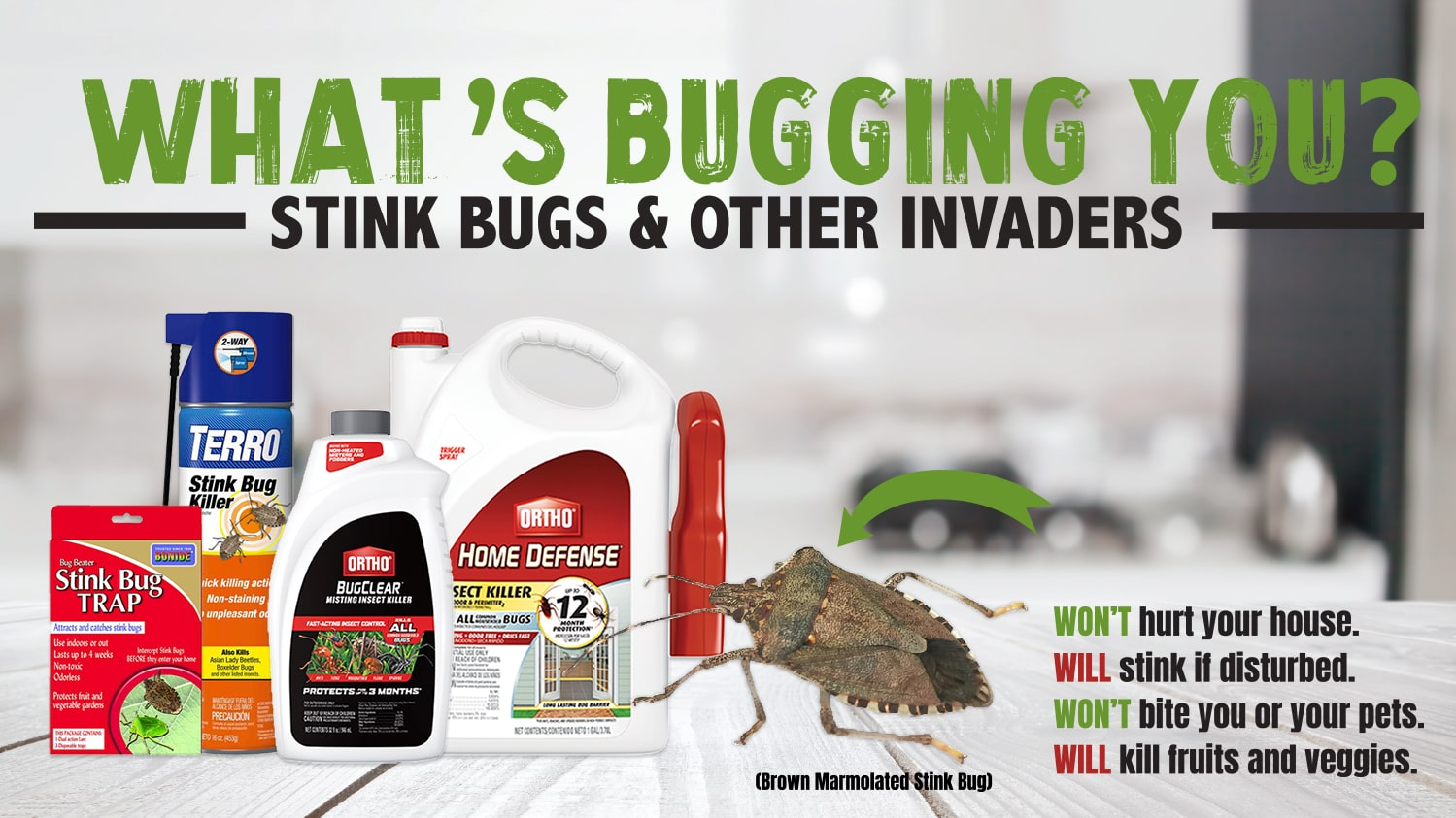 Pest Blog Stink Bugs - What's Bugging You