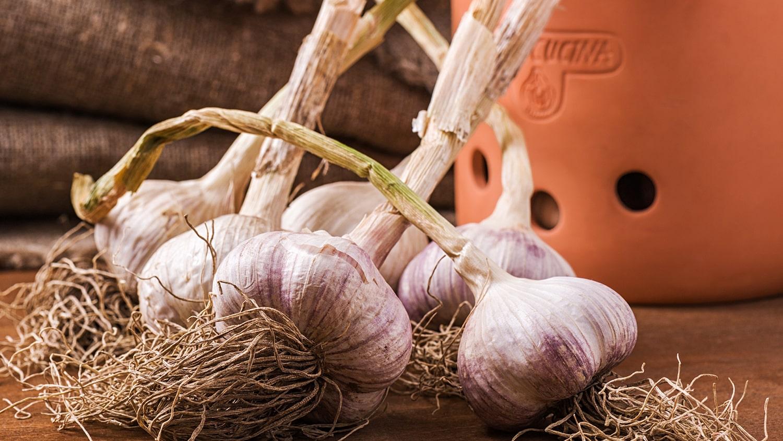 Fresh garlic - Planting Garlic Blog