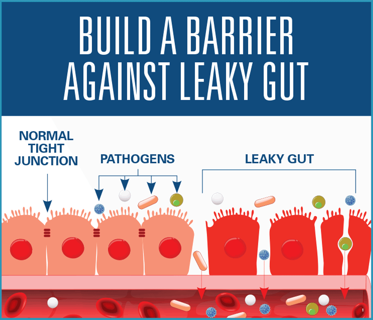 Build A Barrier Against Leaky Gut