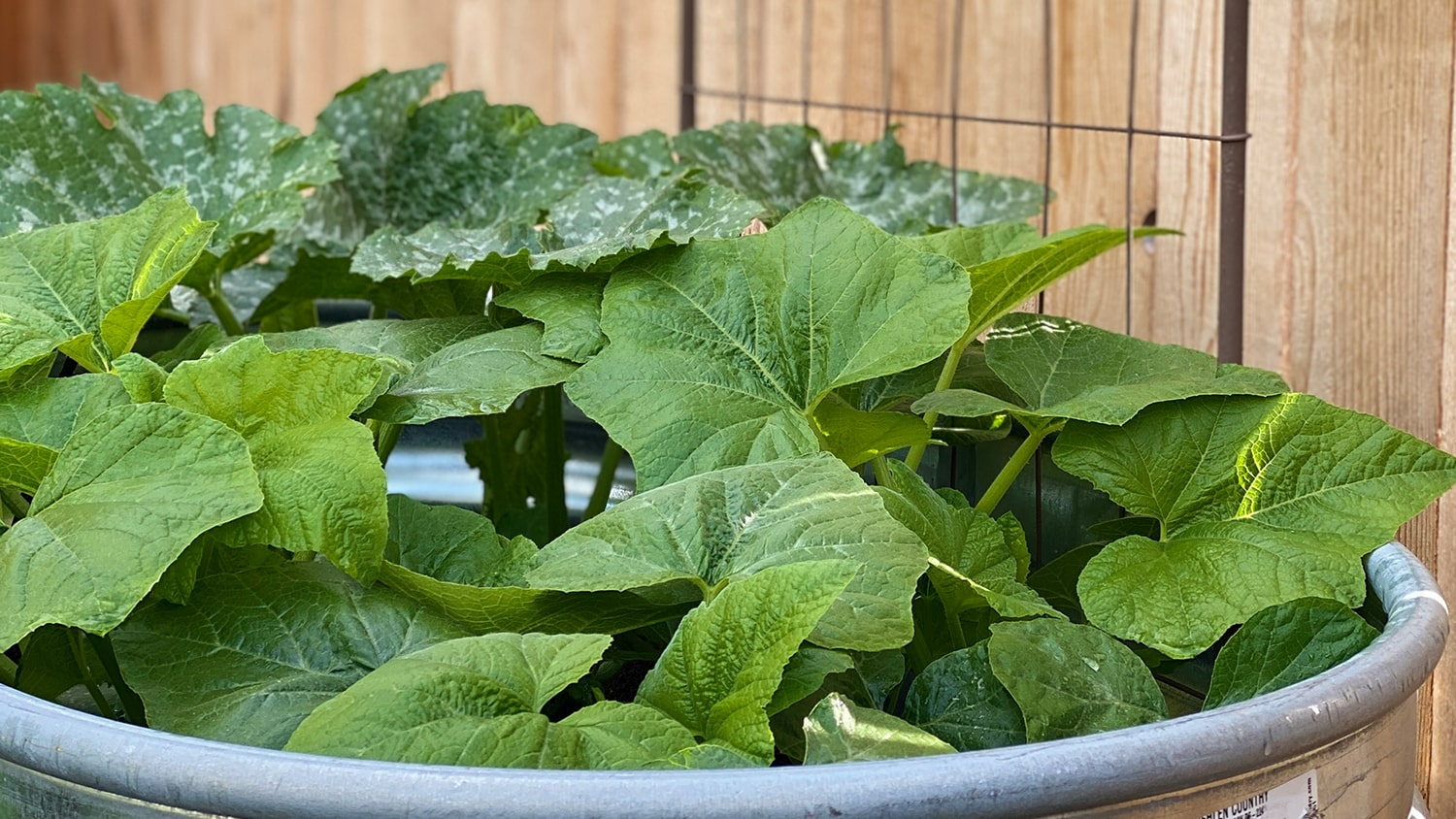 Keeping Plants Healthy in the Heat Blog - Planters