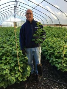 Tim Aman in a greenhouse with hazelnut sapplings