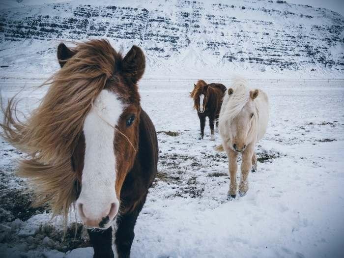 winter-horse-care-feeding