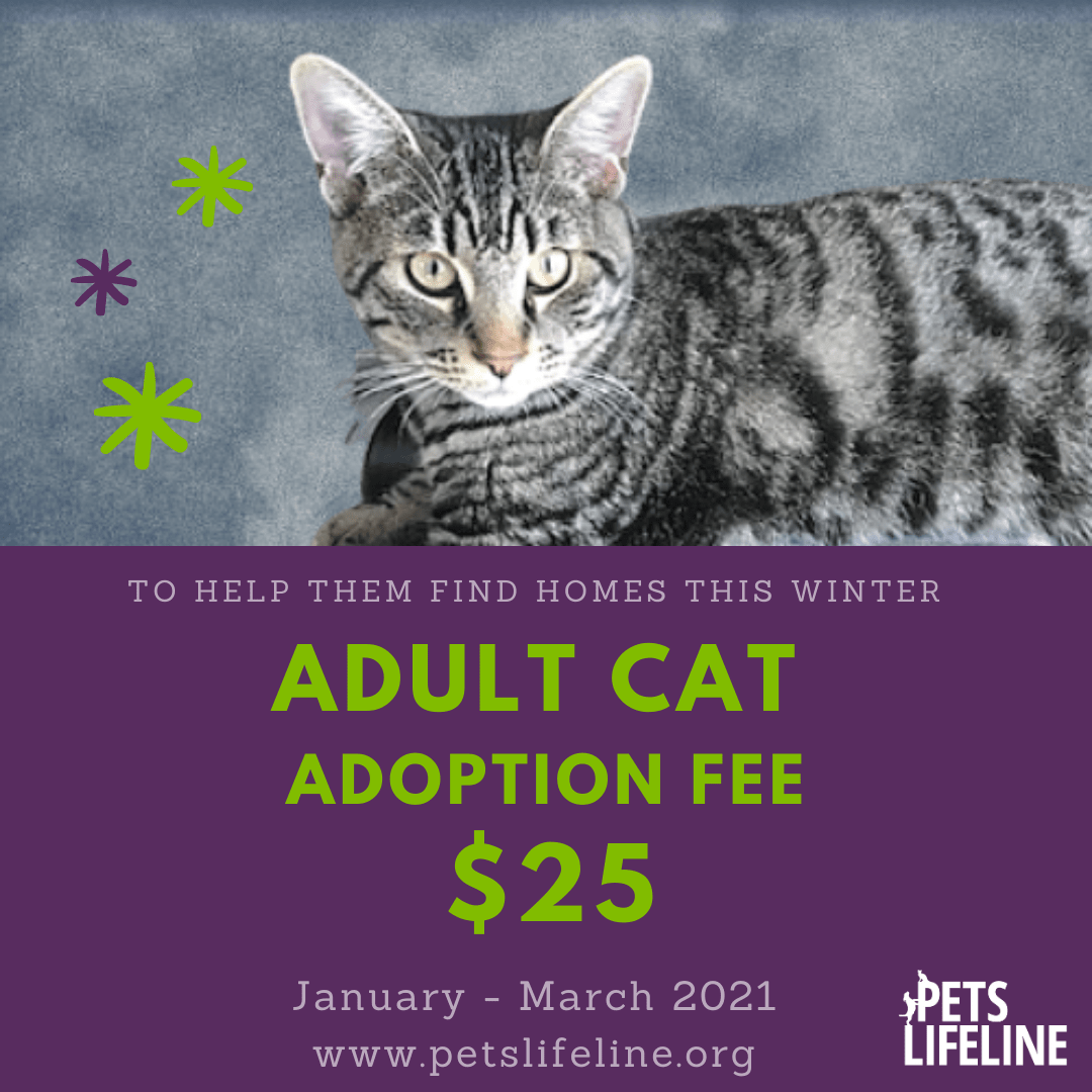 Adult Cats Adoption Special