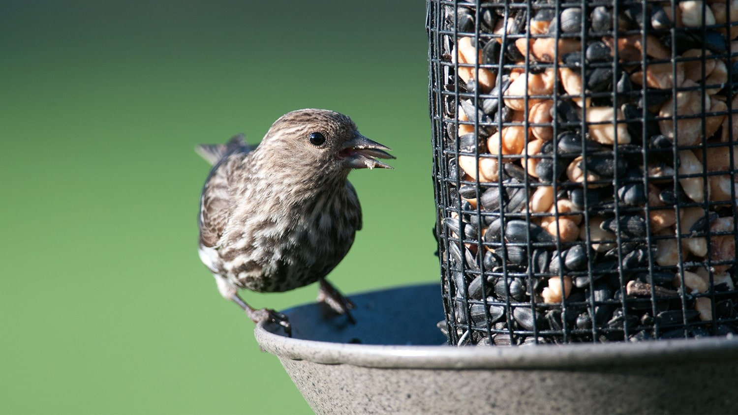Cleaning for Healthy Backyard Birds