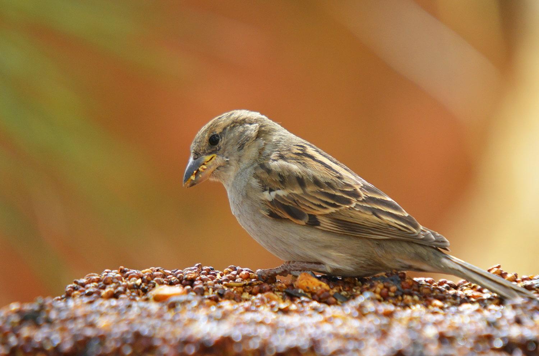Feeding Wild Birds Blog