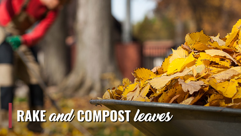 November Garden Tips Rake and Compost Leaves