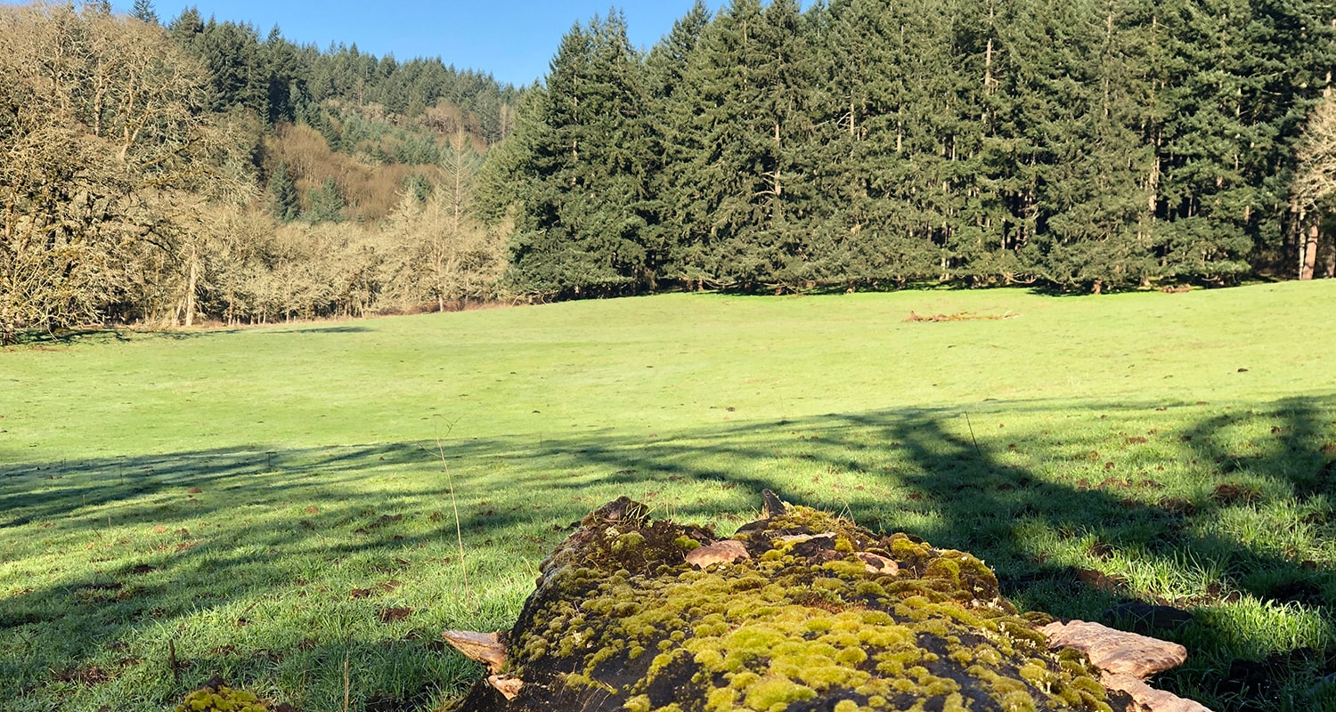 Pasture Seed Blog - Caring For New Pasture