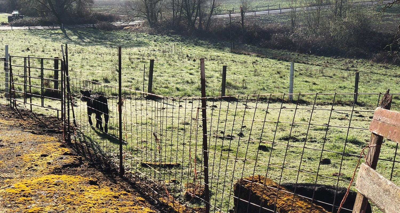 Pasture Seed Blog - Preparing the Soil
