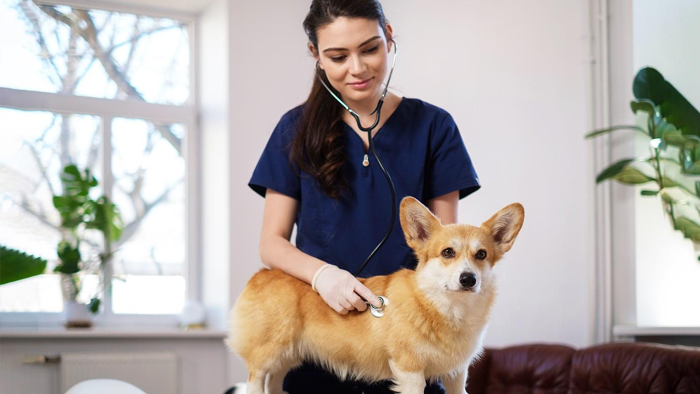 Pet Wellness Tips