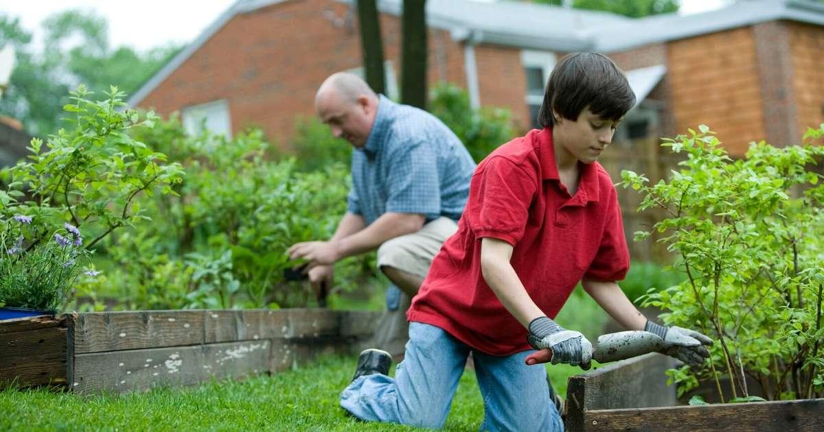 planting raised beds garden