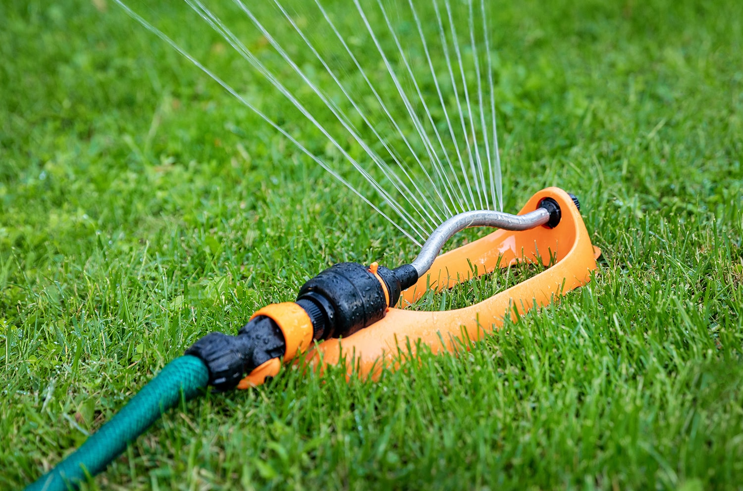 Watering lawns in Summer Blog