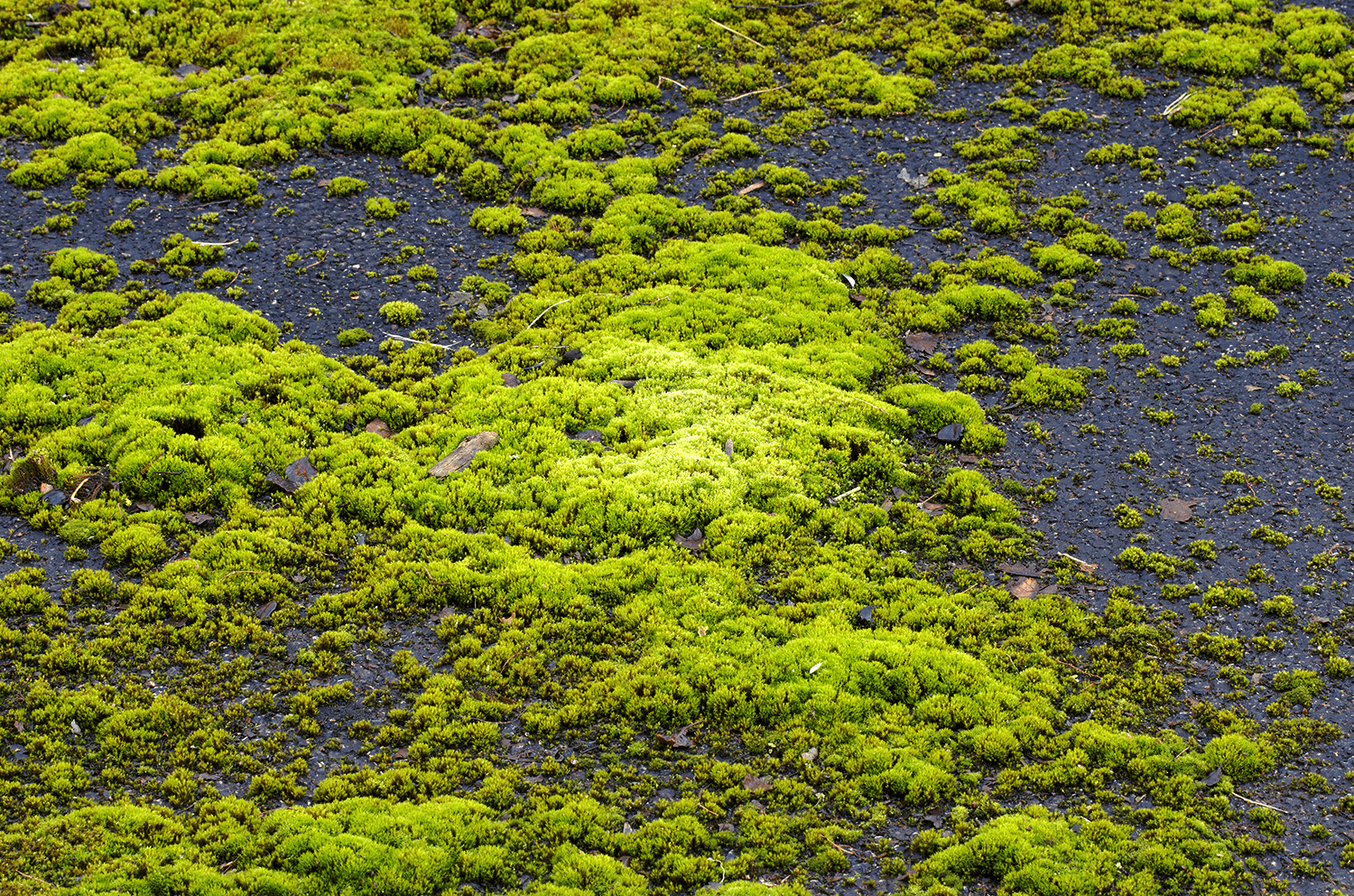 Why Does Moss Grow on my Roof