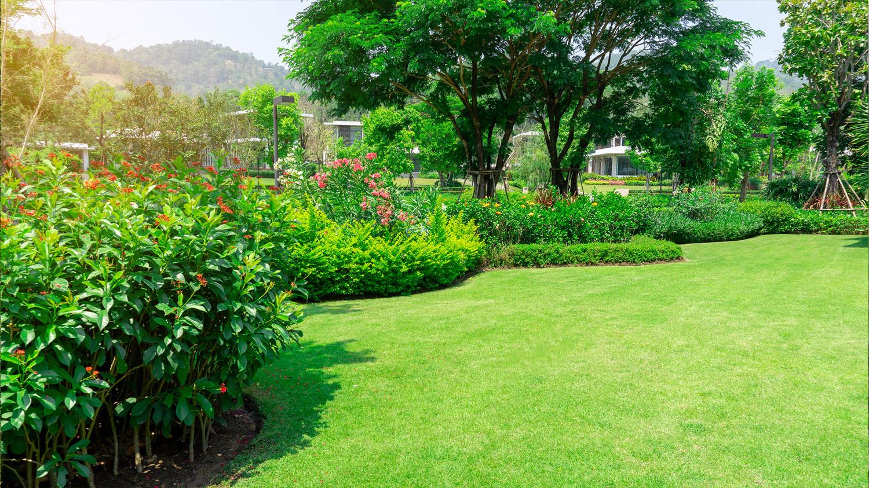 Beautiful yard landscape