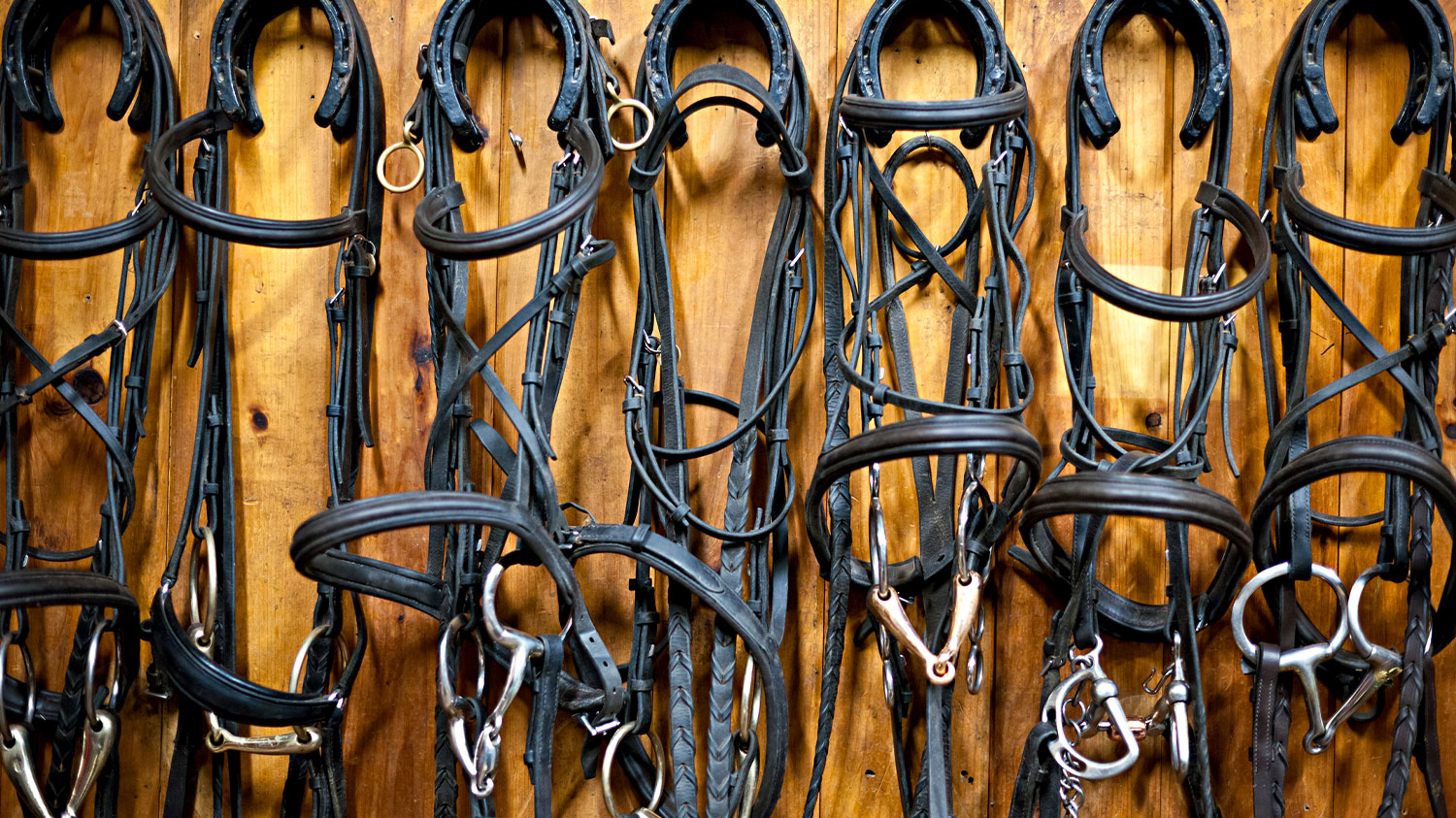 Bridles Hanging in Stable