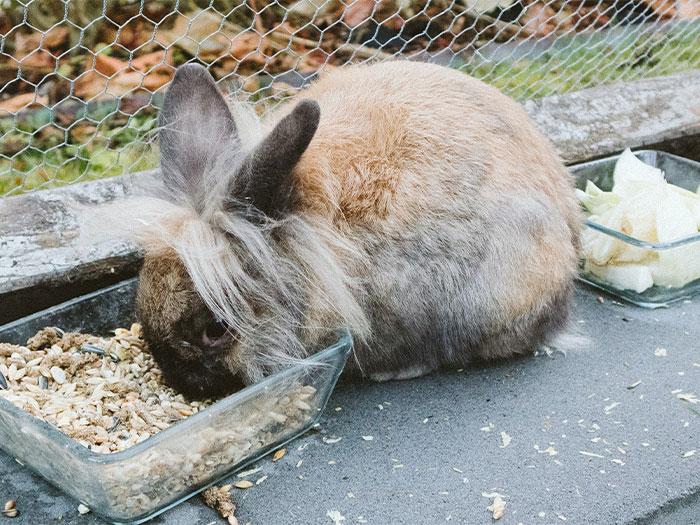 Brown Rabbit Eating Food
