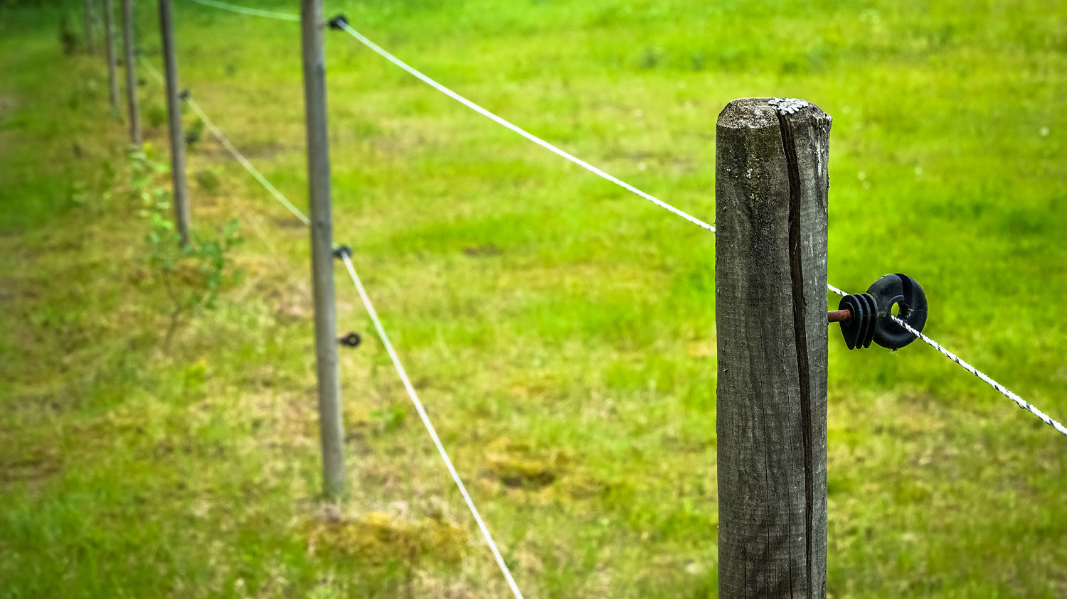 Electric cattle fence and wiring