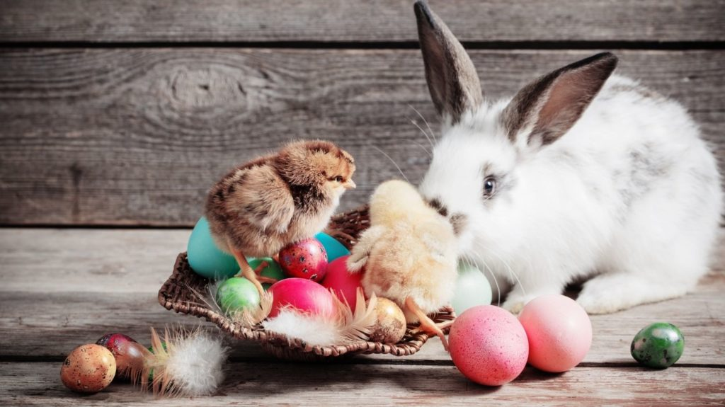 chicken-and-rabbit-with-Easter-eggs-on-wooden-background-Rural-poultry-farm-Agriculture-and-agribusiness