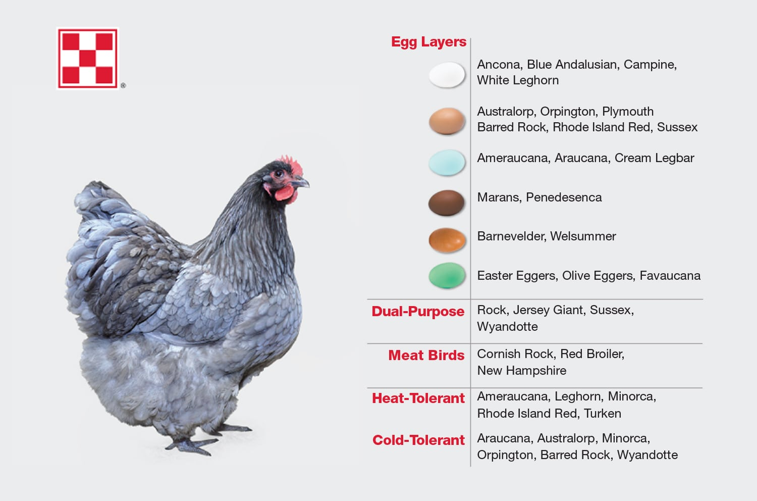 chicken breeds egg colors blog chart