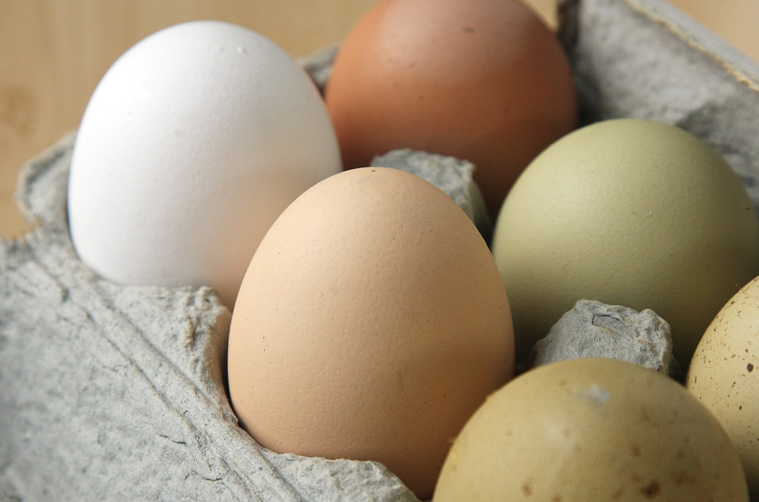 chicken breeds egg colors blog