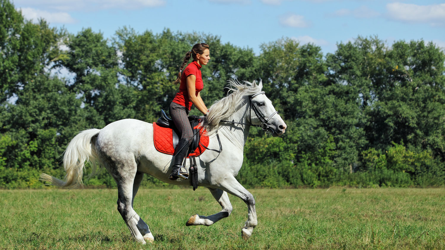 Equestrian Training in Field