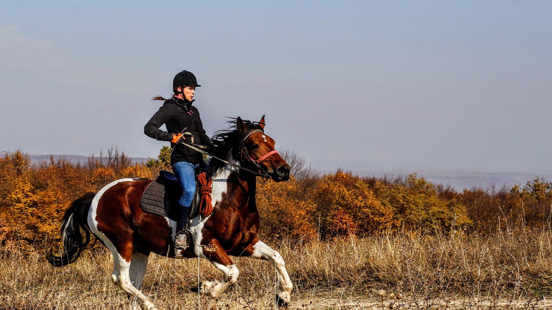 Horseback Training Tips