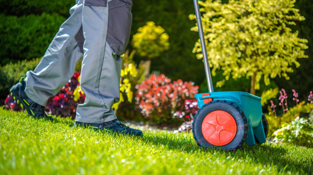 Grass Sowing in Garden
