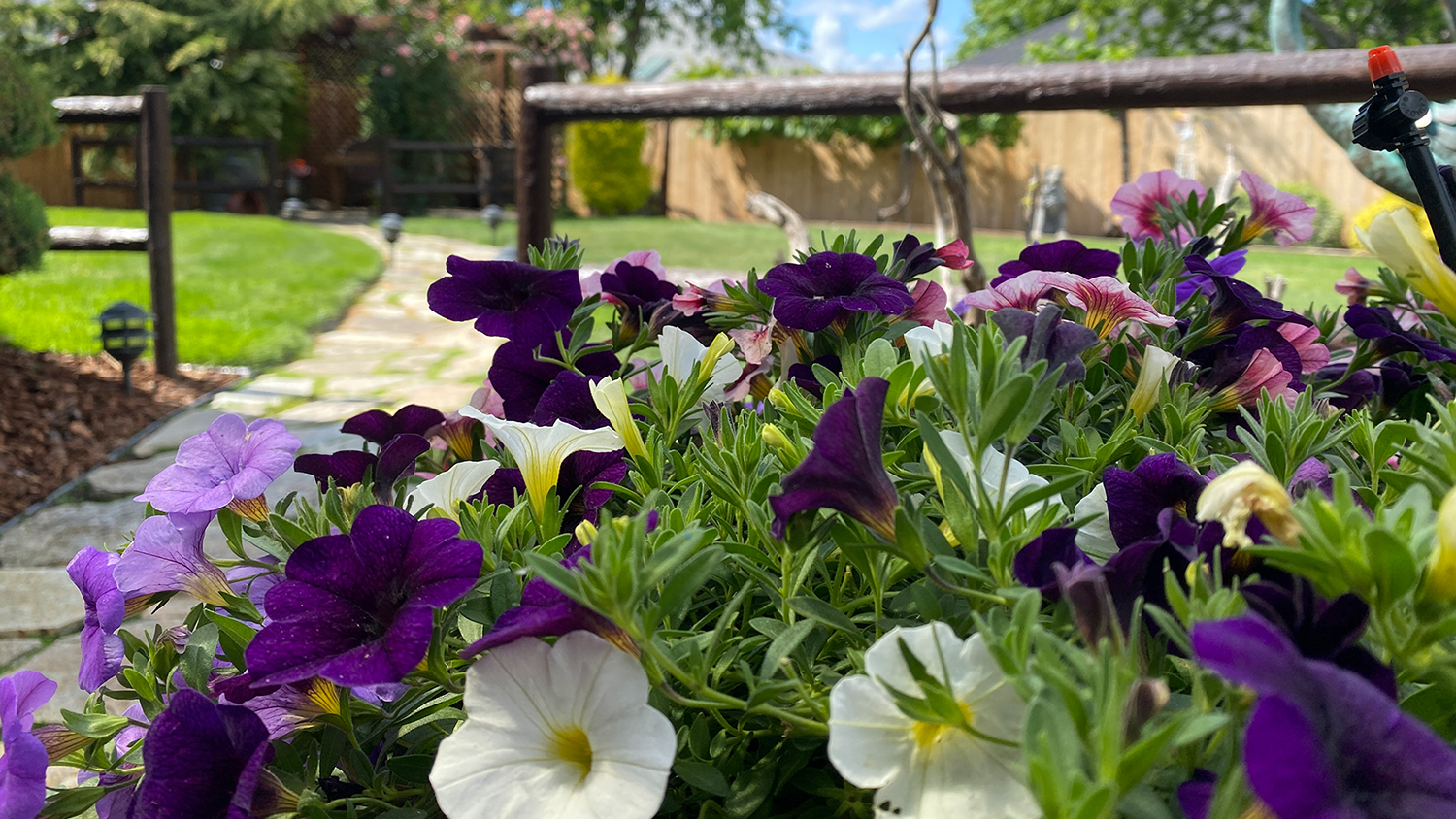 hanging basket in the sun - Keeping Plants Healthy in the Heat Blog