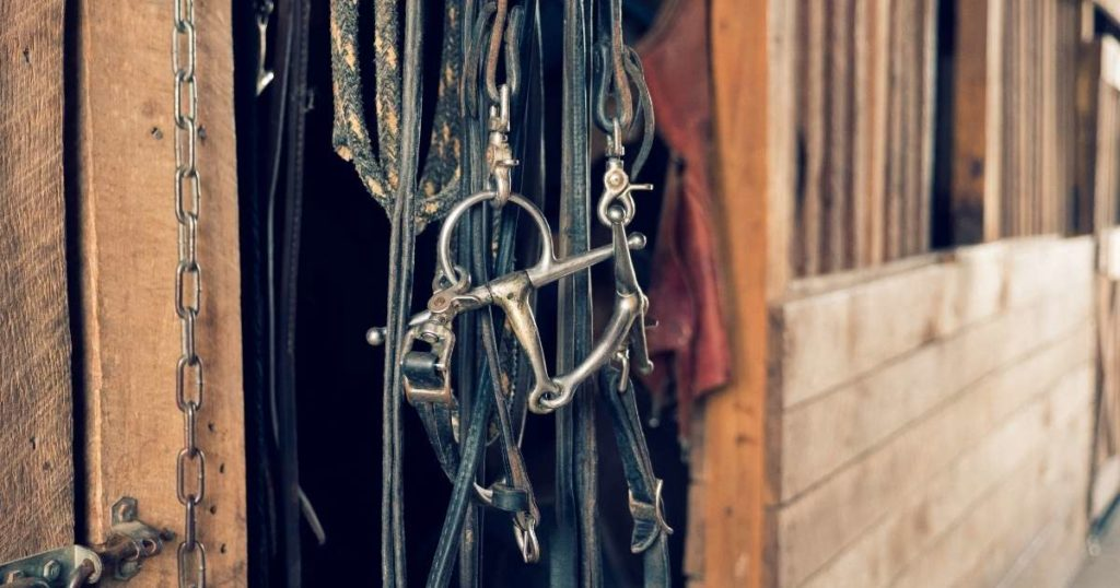 horse-bridles-senior-horse-care