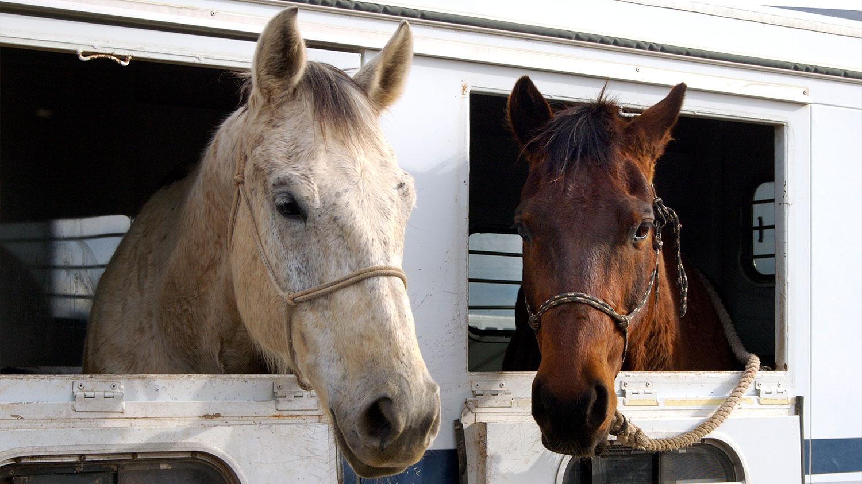 Horse Stall Mat