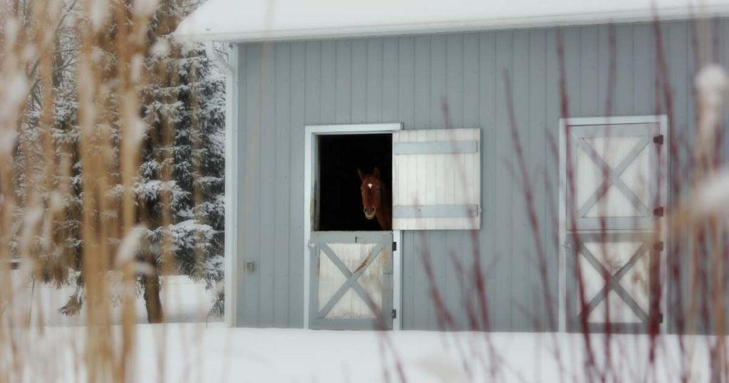 horse-winter-barn