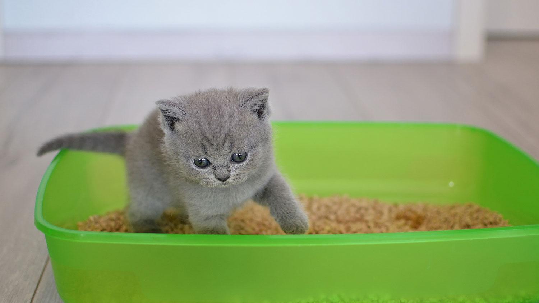 Kitten in green litter box