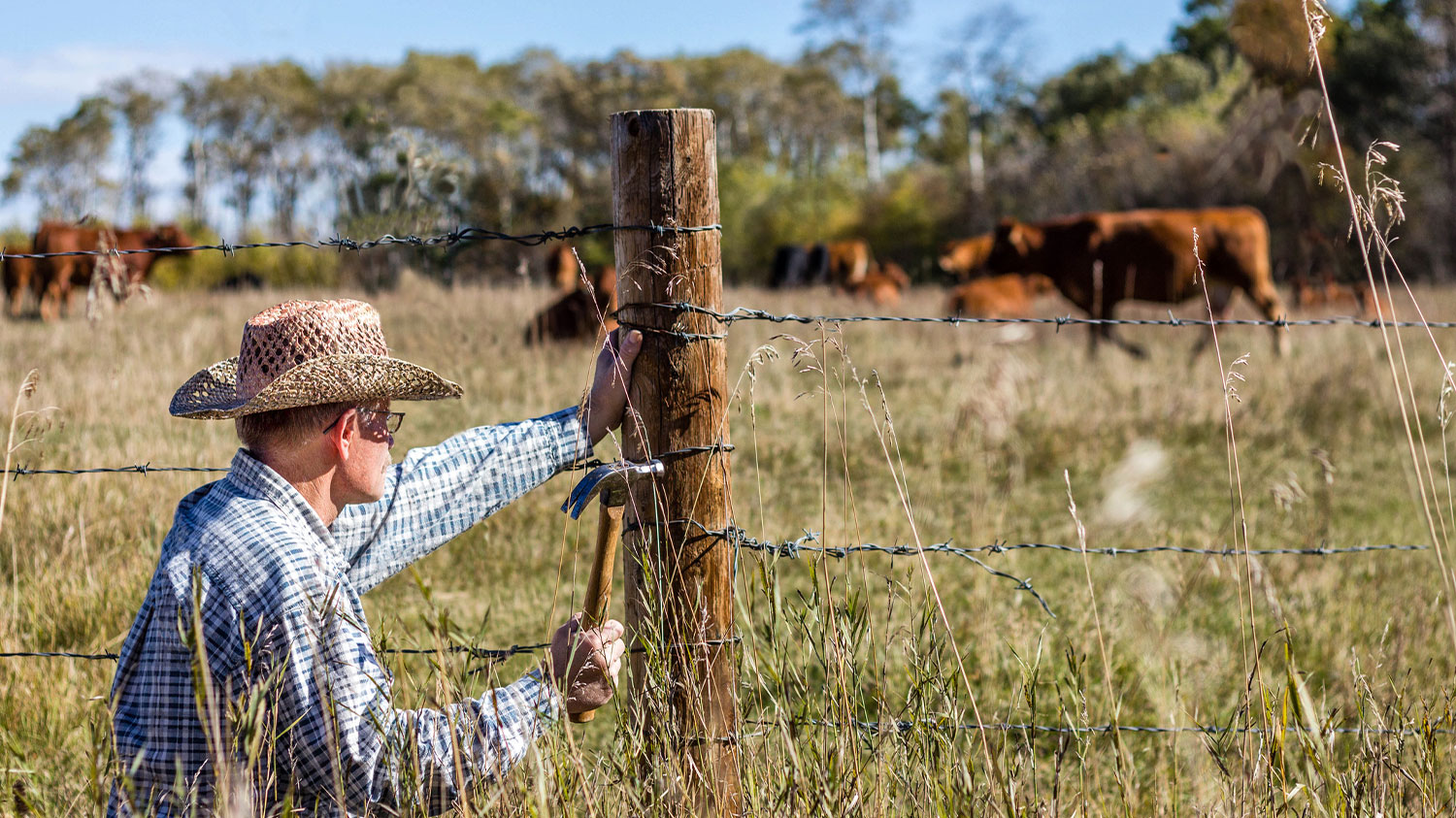 Cowboy putting up cattle fence