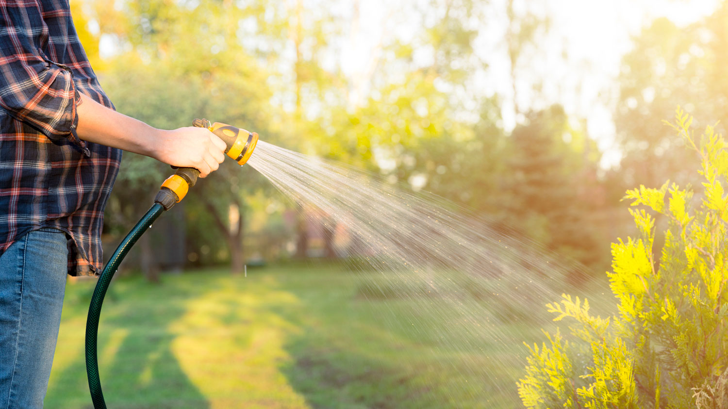 Pregnant woman watering grass