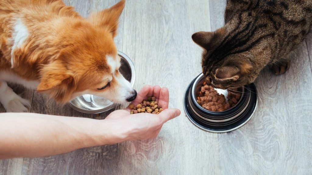 owner-pours-dry-food-to-the-cat-and-dog-in-the-kitchen.-Master's-hand 1500x843