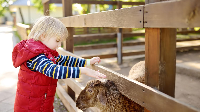 Petting Zoo at Barnyard Birthday