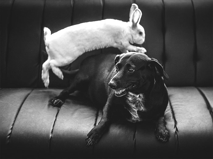 Rabbit Playing With Dog
