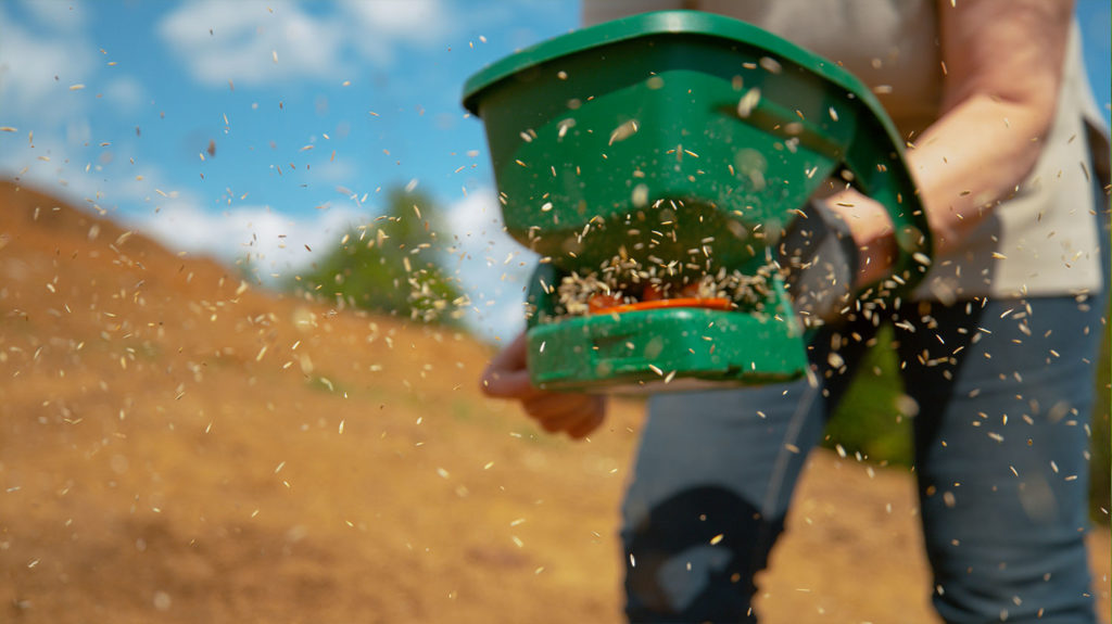 Sowing Grain in Soil Patch