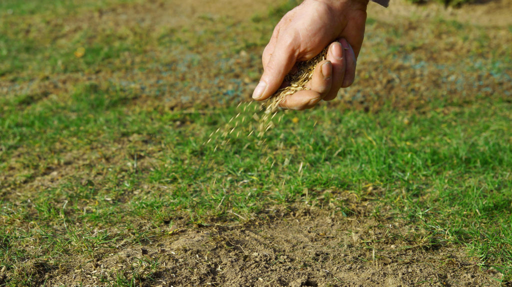 Sowing Grass Seeds By Hand