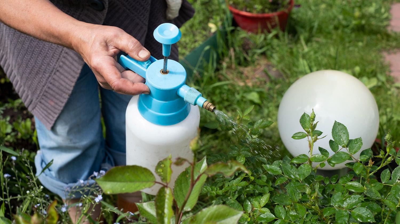 Spraying Aphids With Bug Spray